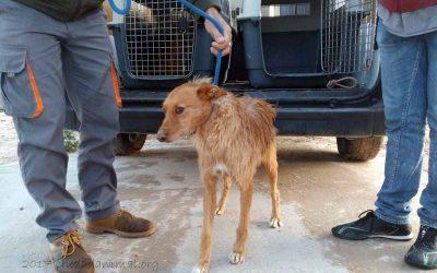 7 Hunde, unter ihnen 2 wenige Monate alte Welpen…