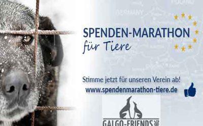 Spendenmarathon für Tiere – Bitte stimmen Sie für uns ab!