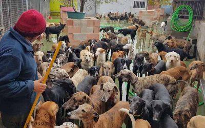 Spendenaufruf für die frierenden Galgos im Tierheim Ciudad Animal