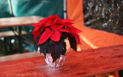 Nachlese: Unser Adventsbasar am 1. Dezember
