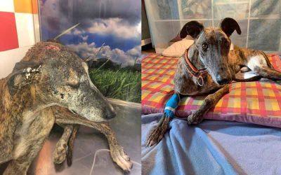 VIGGO & NEO zwei neue, verletzte Tierheimschützlinge