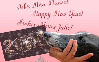 Das Galgo-Friends Team wünscht allen ein Frohes Neues Jahr