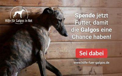 """Tierschutz-Shop Aktion """"Hilfe für Galgos in Not"""""""