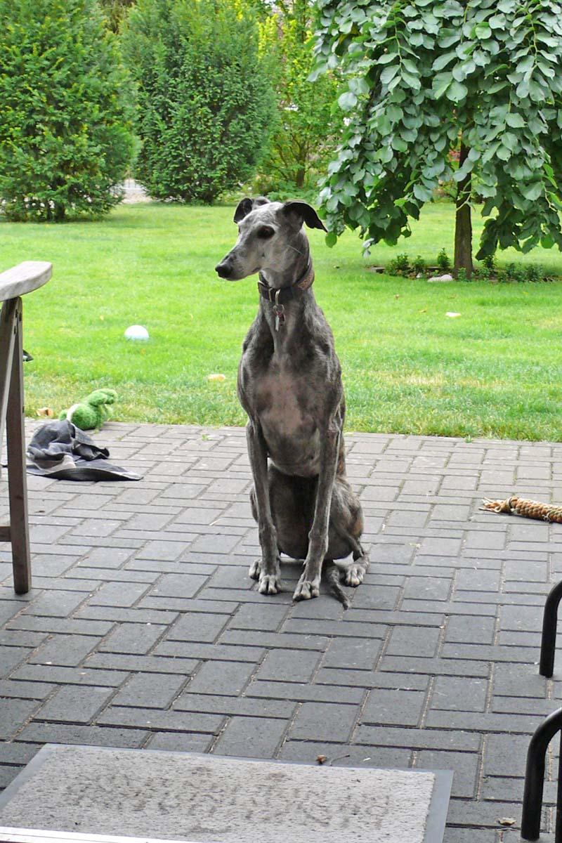 Denisa wartet aufs Dinner