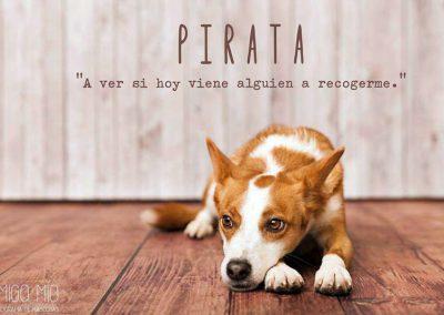 PIRATA16-400×284