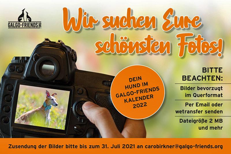 02_GalgoFriends_Kalender22_FotosGesucht