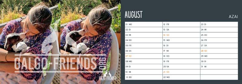Galgo_Friends_Tischkalender_2022_August