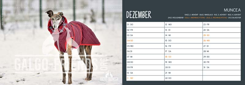 Galgo_Friends_Tischkalender_2022_Dezember