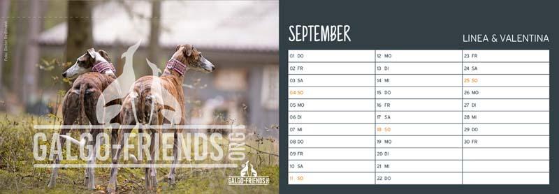 Galgo_Friends_Tischkalender_2022_September