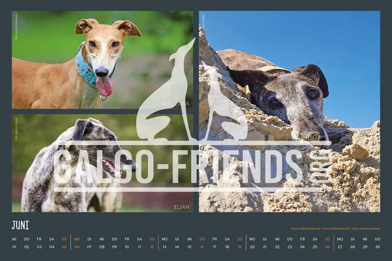 Galgo_Friends_Wandkalender_2022_10