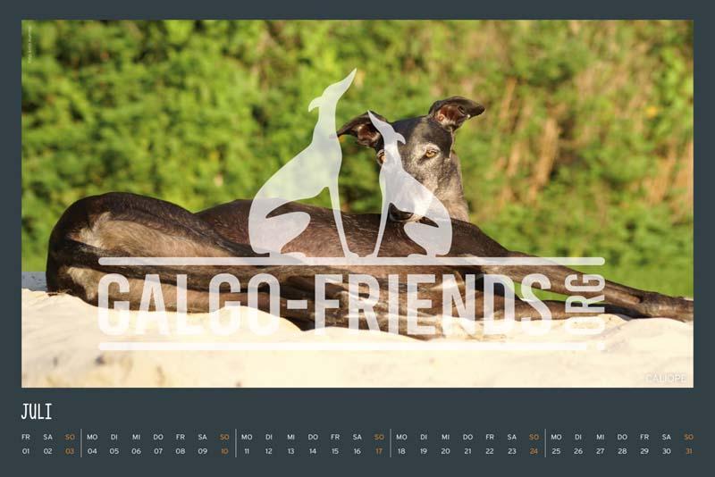 Galgo_Friends_Wandkalender_2022_11