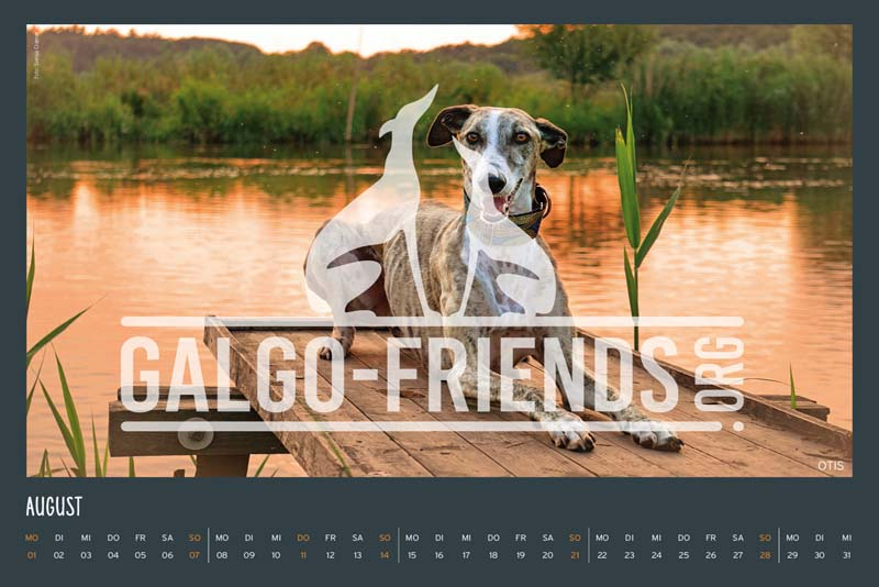 Galgo_Friends_Wandkalender_2022_12