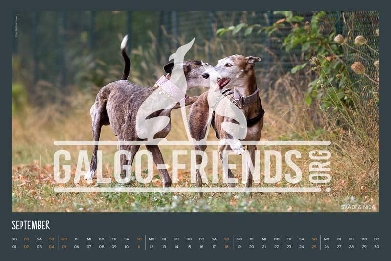 Galgo_Friends_Wandkalender_2022_14