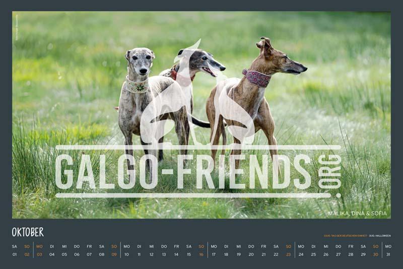 Galgo_Friends_Wandkalender_2022_15