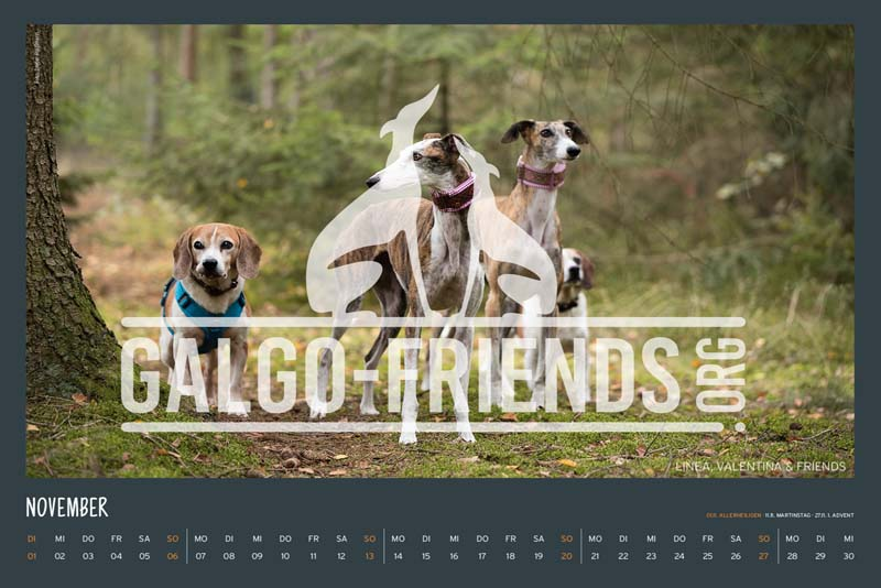 Galgo_Friends_Wandkalender_2022_17