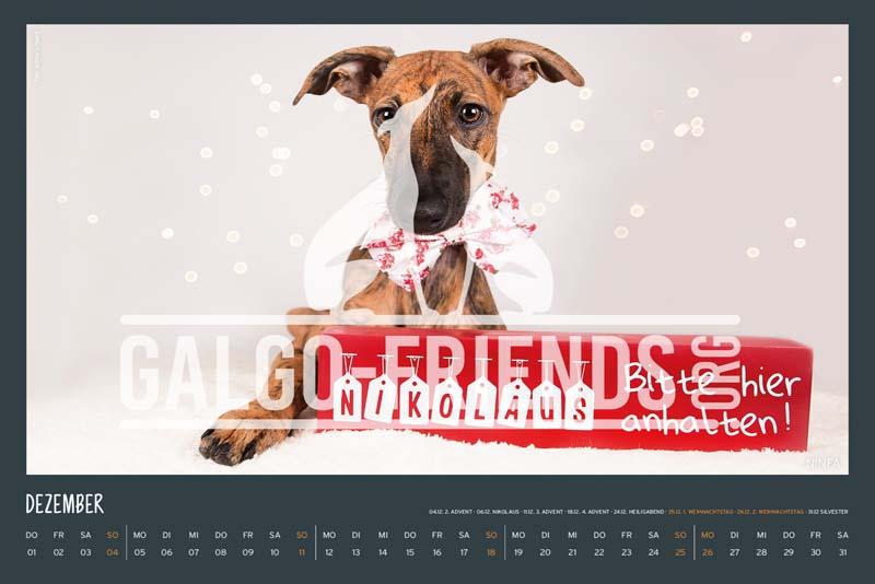 Galgo_Friends_Wandkalender_2022_18