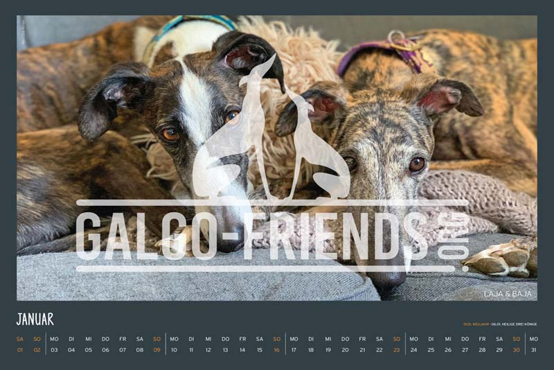 Galgo_Friends_Wandkalender_2022_2