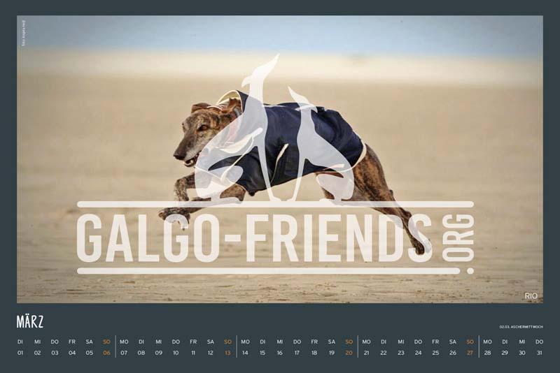 Galgo_Friends_Wandkalender_2022_5