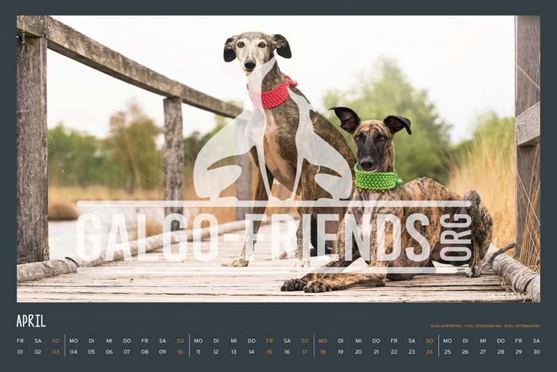 Galgo_Friends_Wandkalender_2022_6