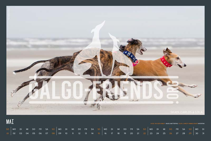 Galgo_Friends_Wandkalender_2022_8