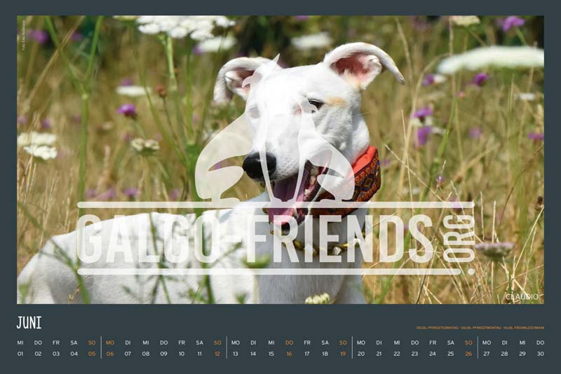 Galgo_Friends_Wandkalender_2022_9
